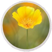 Yellow Poppy Flower, Mount Hood Round Beach Towel