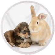 Yorkipoo Pup With Sandy Rabbit Round Beach Towel