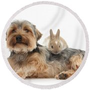Yorkshire Terrier Dog And Baby Rabbit Round Beach Towel