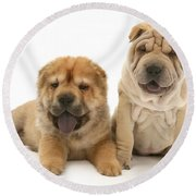 Young Dogs Round Beach Towel