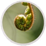 Young Fern In The Morning Sun Round Beach Towel