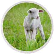 Young Sheep Round Beach Towel