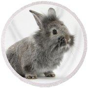 Young Silver Lionhead Rabbit Round Beach Towel