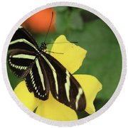 Zebra Longwing Round Beach Towel