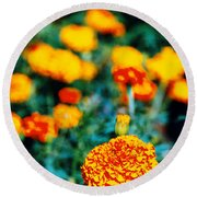 Zinnias Round Beach Towel
