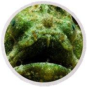 Frogfish Round Beach Towel