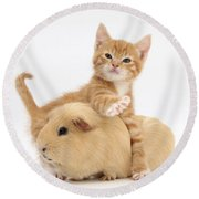 Kitten Round Beach Towel