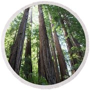 Redwoods Sequoia Sempervirens Round Beach Towel
