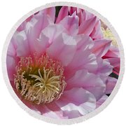Pink Cactus Flowers Round Beach Towel