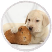 Puppy And Guinea Pig Round Beach Towel by Mark Taylor