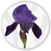 Blue Iris Blooming Round Beach Towel