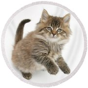 Maine Coon Kitten Round Beach Towel
