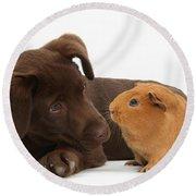 Puppy And Guinea Pig Round Beach Towel