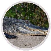 19- Alligator Round Beach Towel