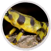 Harlequin Toad Round Beach Towel