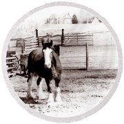 1900  Clydesdale Horse Round Beach Towel