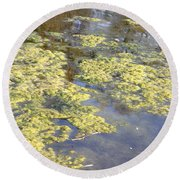 Algae Bloom In A Pond Round Beach Towel by Photo Researchers, Inc.