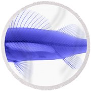An X-ray Of Yellow Perch Round Beach Towel