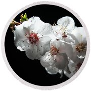 Apricot Flowers At Night Round Beach Towel