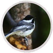 Blackcapped Chickadee Round Beach Towel