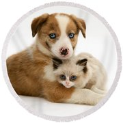 Border Collie And Birman-cross Kitten Round Beach Towel