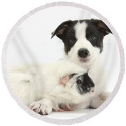Border Collie Pup And Guinea Pig Round Beach Towel
