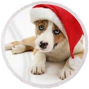 Border Collie Puppy Round Beach Towel by Jane Burton