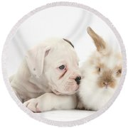 Boxer Puppy And Young Fluffy Rabbit Round Beach Towel