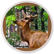 Browsing Elk In The Grand Canyon Round Beach Towel