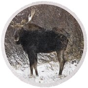 Bull Moose In Winter Round Beach Towel