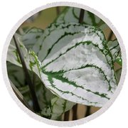 Caladium Named White Christmas Round Beach Towel