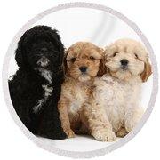 Cockerpoo Puppies Round Beach Towel