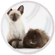 Colorpoint Rabbit And Siamese Kitten Round Beach Towel