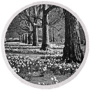 Daffodils In St. James's Park Round Beach Towel