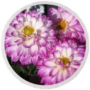 Dahlia Named Pink Bells Round Beach Towel