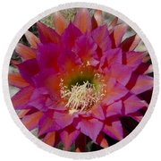 Dark Pink Cactus Flower Round Beach Towel