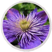 Double Clematis Named Crystal Fountain Round Beach Towel