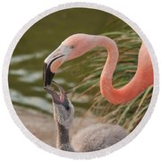 Flamingos Round Beach Towel