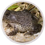 Gopher Frog Round Beach Towel