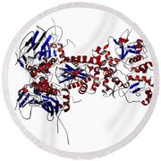 Heat Shock Protein 90 In A Larger Round Beach Towel