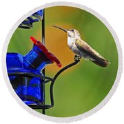 Hummer At The Feeder Round Beach Towel