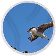 Juvenile Herring Gull Round Beach Towel