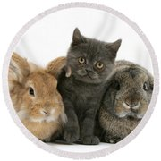 Kitten And Rabbits Round Beach Towel