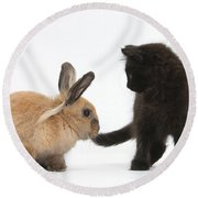 Kitten And Young Rabbit Round Beach Towel