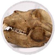 Kodiak Bear Skull Round Beach Towel
