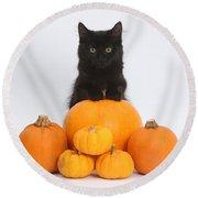 Maine Coon Kitten And Pumpkins Round Beach Towel