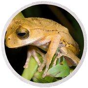 Marsupial Frog Round Beach Towel