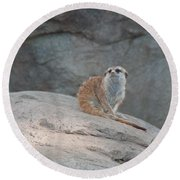 Meerkat Round Beach Towel