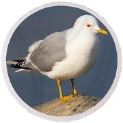 Mew Gull Round Beach Towel