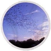 Mexican Freetail Bats Round Beach Towel